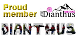 banner Dianthus