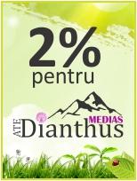 Dianthus Medias