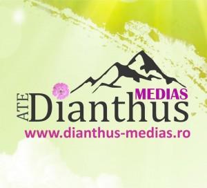 dianthus-medias