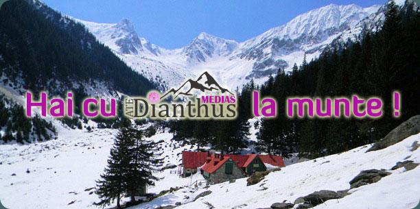 munte-dianthus